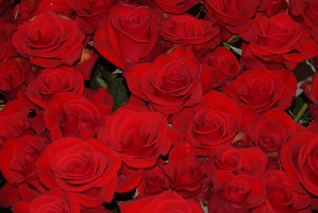 red roses wikimedia