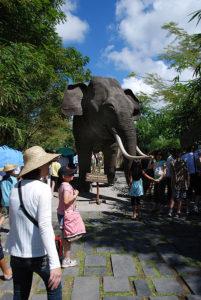 [Bali Safari & Marine Park Author William Cho]