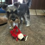 Review: Pet Gift Box Is The Perfect Gift For Your Furry Friend